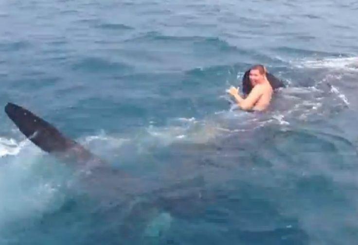 Aksi Gila! Remaja Ini Berenang Bareng Hiu 9 Meter, Nasibnya?