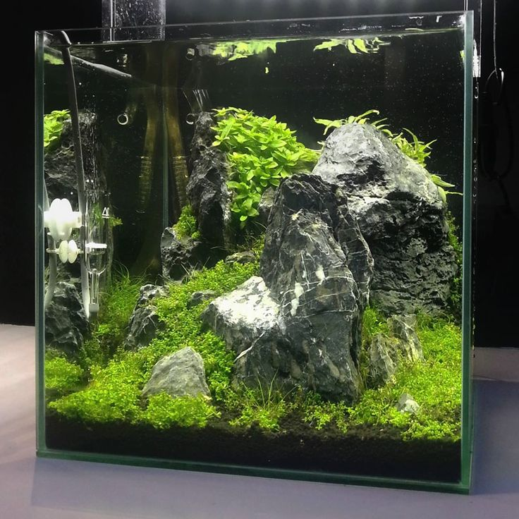 1000 images about nano aquascaping on pinterest for Above water fish tank