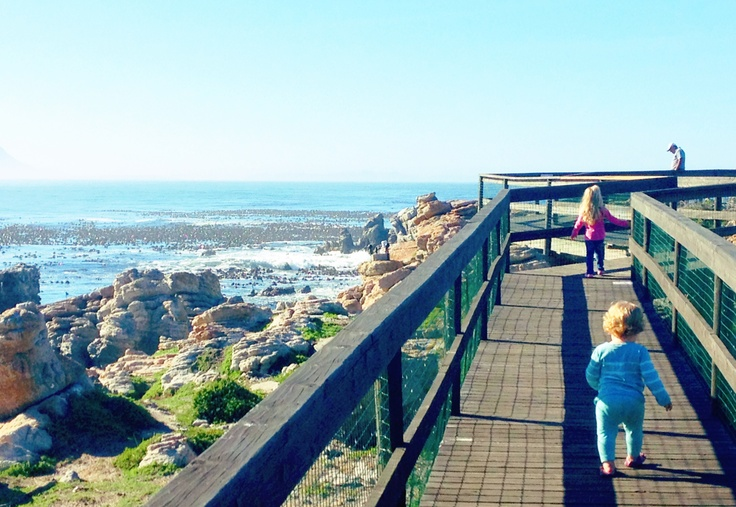 The board walk at Stony Point, Betty's Bay - fabulous for toddlers and penguin spotting and at R10 a head one of the best value experiences ever!