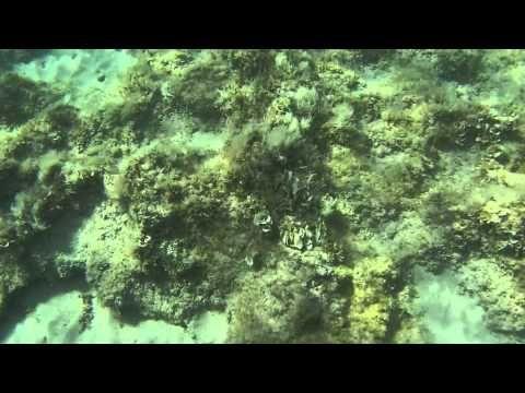 Salento Otranto 15) Spiaggia azzurra, Baia dei turchi - YouTube