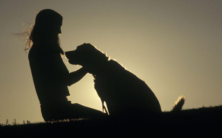"""""""Pidä+minua+sylissä,+kun+aikani+on+tullut""""+-+10+asiaa,+jotka+koirasi+sanoisi+sinulle,+jos+pystyisi"""