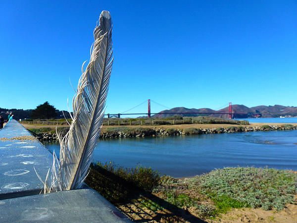 A single feather pressed between the hand rail seem with the Golden Gate in the background. Want this picture printed on canvas or cards etc? Click on the image :)