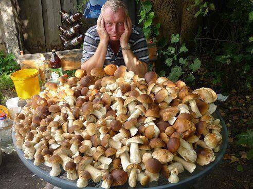 Толи суп сварить, толи с картошкой пожарить...)))