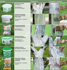 Подготовка и побелка плодовых деревьев в октябре, выбор и приготовление белил