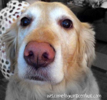 Dog Ate Chocolate Bar Wrapper