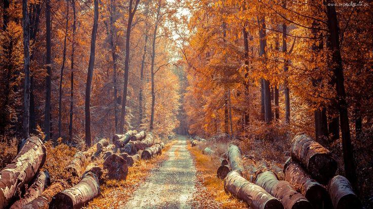 Jesień, Las, Droga, Ścięte, Pnie, Drzew