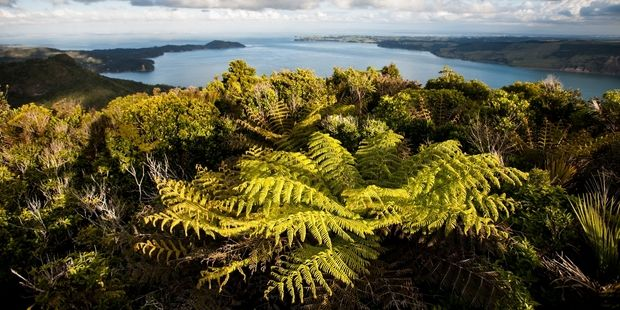 The view towards Manukau from Mt Donald McLean Lookout. Photo / Richard Robinsomn