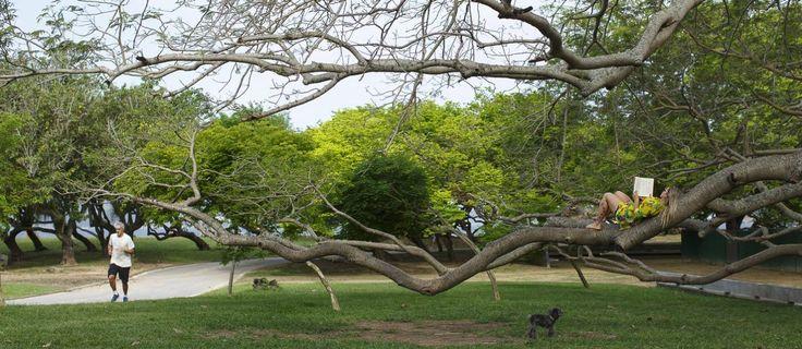 Parque do Flamengo, que completa 50 anos Foto: Daniel Marenco / Agência O Globo