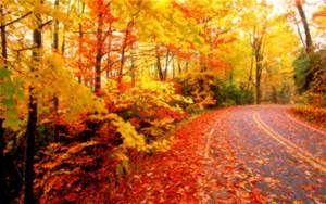 fall desktop backgrounds - Bing Images