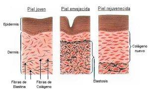 Te explicamos qué es el colágeno y la elastina