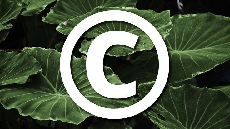 Plant retailer awarded $900K by federal jury in copyright case over stolen photos