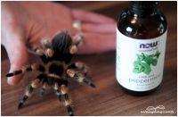 Répulsif anti-araignées aux huiles essentielles