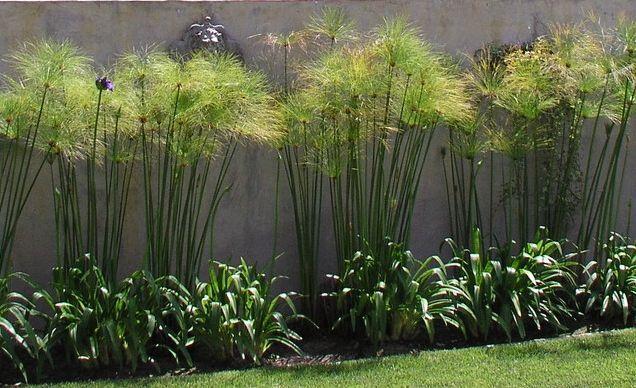 28 best landscaping images on pinterest plants for 7194 garden pond