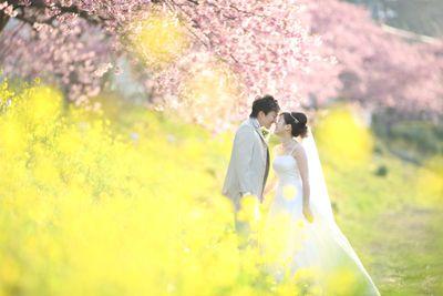 大自然の結婚写真のお店です(。╹ω╹。)☆期間限定!【河津桜のウェディングフォト】2月下旬~3月上旬まで開花する早咲き桜です(✿╹◡╹)ノウェディングドレ...