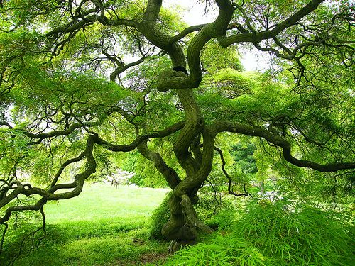 i spent 1/2 my childhood in a tree and i'd love to spend 1/2 my adulthood in one, reading
