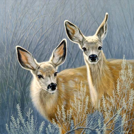 Mule Deer fawn painting by Paul Krapf