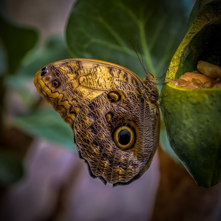 Butterfly - shared with pixbuf.com #butterfly #photography #macro #colors #colorful #details