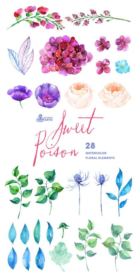 Sweet Poison: 28 Watercolor Elements hydrangea by OctopusArtis