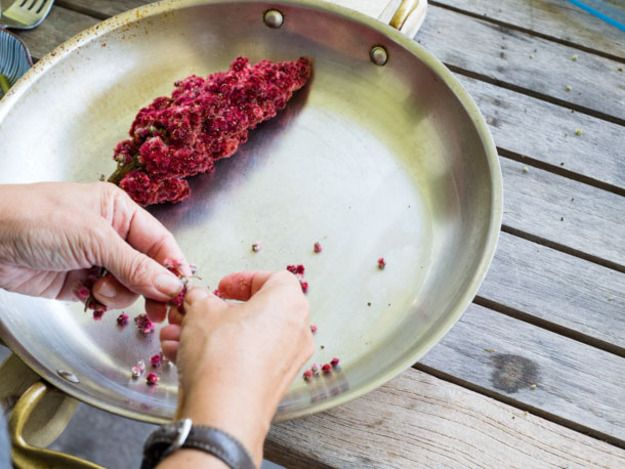 All About Sumac- Harvesting Your Own  The ruby-hued, tart-flavored wild fruit is just as tasty as it is beautiful.