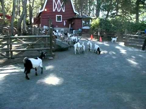 Beacon Hill Park Petting Zoo.