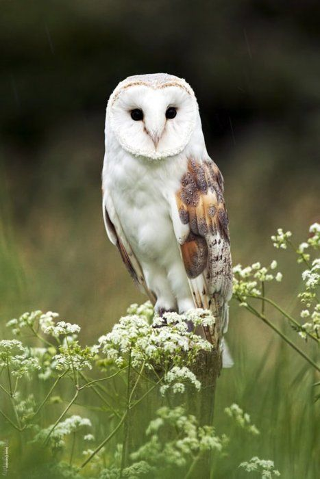 wise. http://contentinacottage.blogspot.com/2012/02/wild-about-owls.html