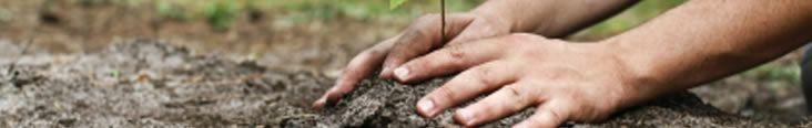 Rain Gardens - Chesapeake Bay Trust