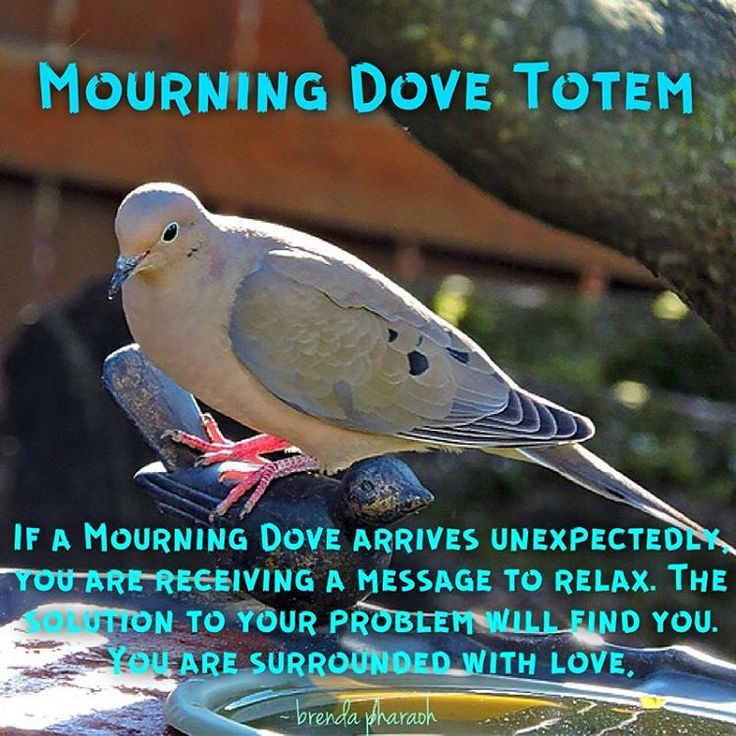Mourning Dove Totem by @sacredhealthjewelry