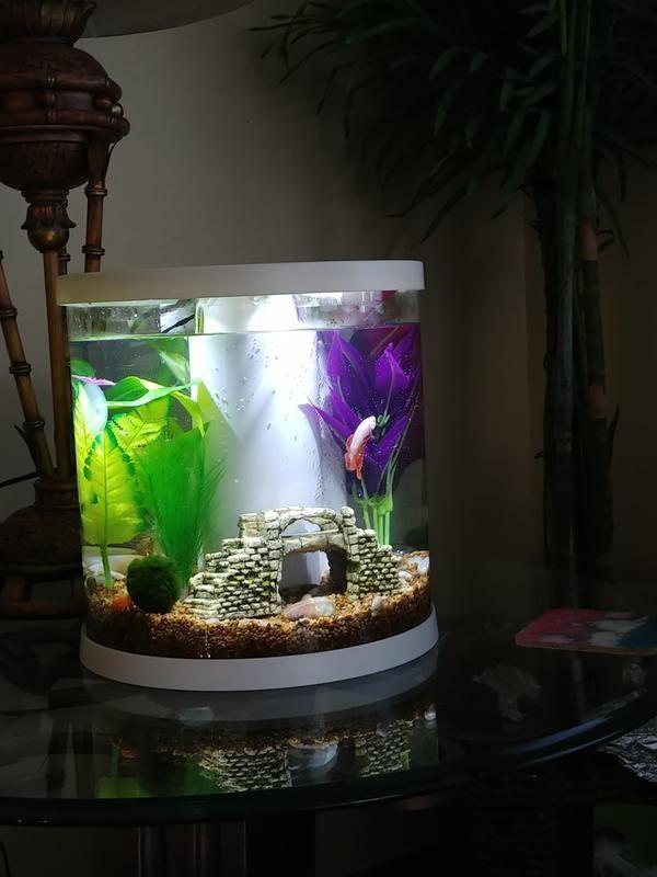 Review Photo 1 Betta Aquarium Cool Fish Tanks Pet Spray