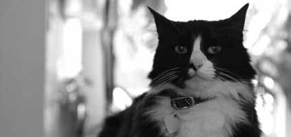 We Talk to Henri Le Chat Noir About Hollywood, Caturdays, and Dogs