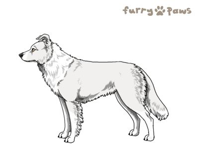 Furry Paws // UCH Kip's Hounded [1.603] 15.4 570 *BOB* x4's Kennel