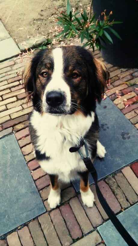 Charming binc #koningbinc #dog #dogmodel #animal #dogs #cute #love