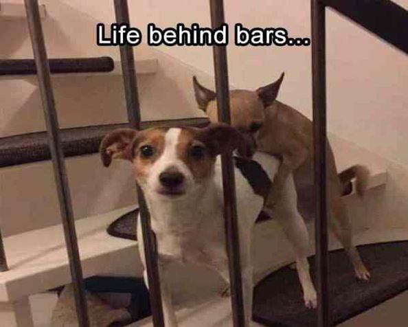 Funny Pictures For Today (#125) – Funnyfoto | Funny Pictures - Videos - Gifs - Page 70
