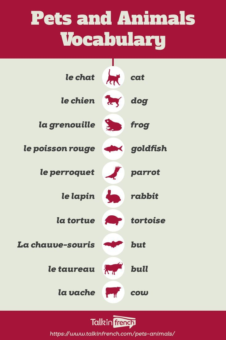 How Do You Call Pets And Animals In French This Article Contains A List Of French Vocabulary For Pets Ensenanza De Frances Clases De Frances Aprender Frances