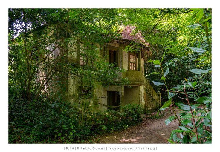 Palácio da Brejoeira / Palacio de Brejoeira / Brejoeira Palace [2014 - Monção - Portugal] #fotografia #fotografias #photography #foto #fotos #photo #photos #local #locais #locals #europa #europe #jardim #jardin #garden #floresta #bosque #forest @Visit Portugal @ePortugal @WeBook Porto @OPORTO COOL @Oporto Lobers