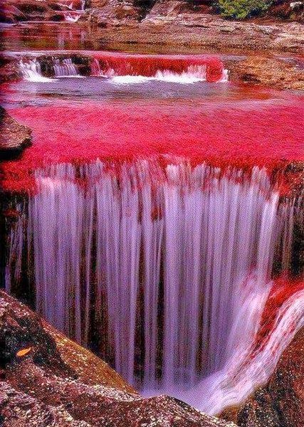 "Cano Cristales is a Columbian river located in the Serrania de la Macarena Providence of Meta. The river is commonly called ""The River of Five Colors"" or ""Liquid Rainbow""."