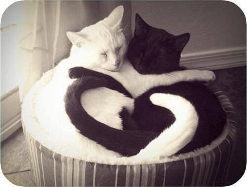 True love. . pic.twitter.com/JNrjZqYqxu