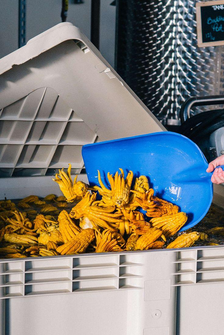 The Taste SF captures Head Distiller Caley Shoemaker turns the Buddha's Hand soaking to make citron vodka at Hangar 1 Vodka distillery in Alameda