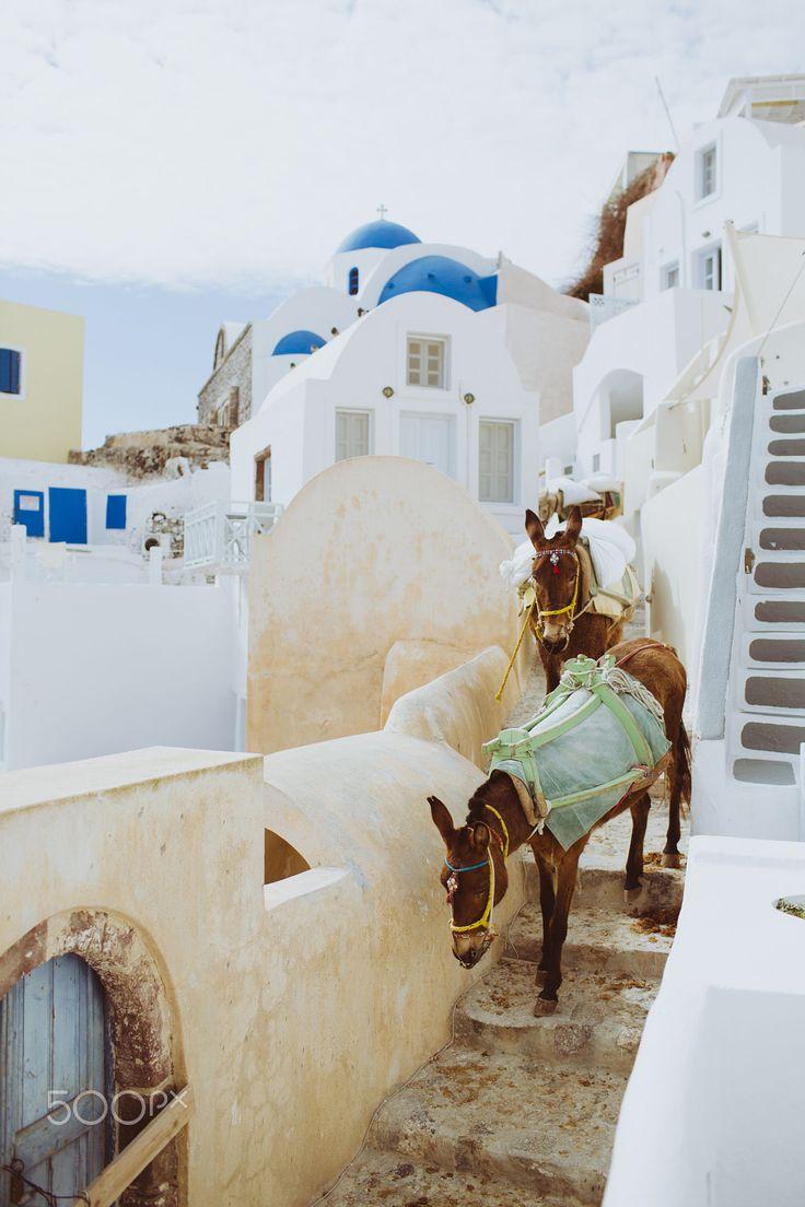 Mules in Santorini. Greece