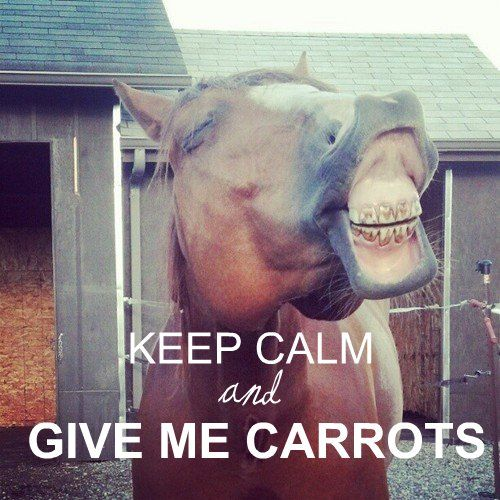 """""""Keep Calm and Give Me Carrots"""" I love when my horse does"""