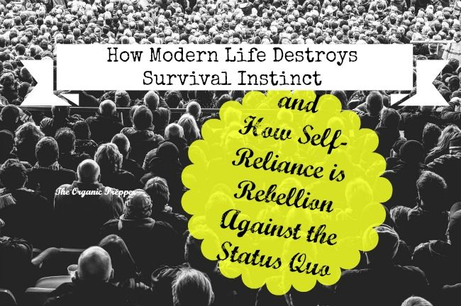 Modern life destroys survival instinct. Most folks just buy the answers to their problems. Self-reliance is an act of epic rebellion against the status quo.