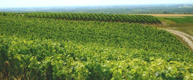 Wijn en toerisme een sprankelende combinatie in de Champagne   ©Daphne Groeneveld