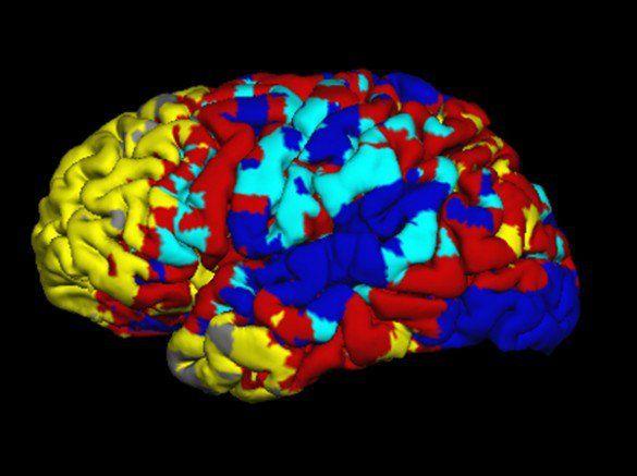 How does Sulbutiamine affect Dopamine Receptors?