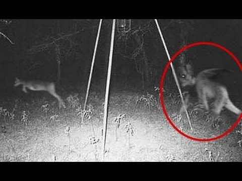 Demon Caught on Camera Chasing Deer? | Mystical Mystery ...