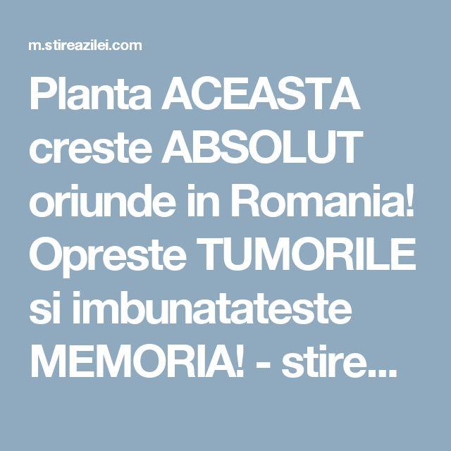 Planta ACEASTA creste ABSOLUT oriunde in Romania! Opreste TUMORILE si imbunatateste MEMORIA! - stirea zilei