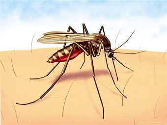 Malaria Causes, Symptoms and Prevention