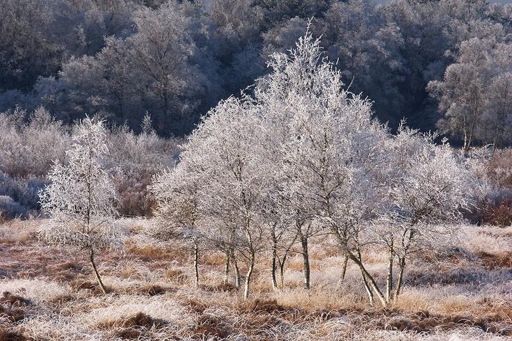 Winter Drenthe Gasteren