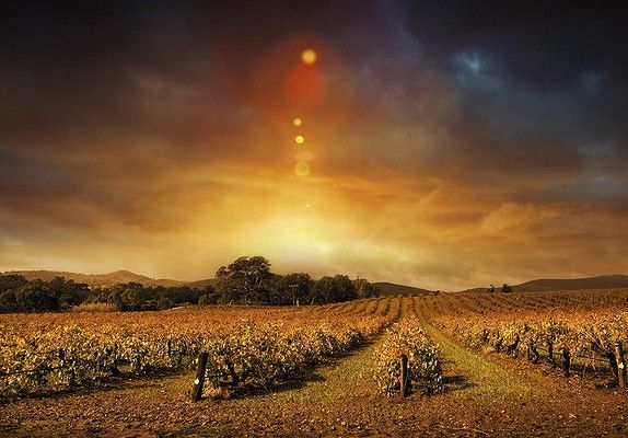 MARGARET RIVER AUSTRALIA. Go For: New night-time tours of award-winning wineries. Stay for: Hunting for those black truffles top chefs adore. Pictured above: Sunset at a Margaret River vineyard.