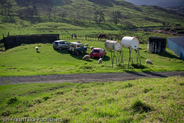 This shot taken on the isolated Hammond family farm at Owhata 35 minutes south-west of Kaitaia in the Far North of New Zealand shows you just how close New Zealandars are to nature.   Sheep and horses graze only metres from a pink Toyota.