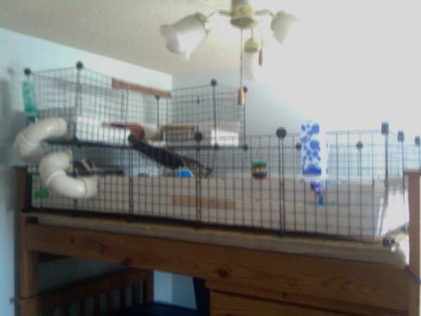 Pvc pipe tubes that go outside the cage