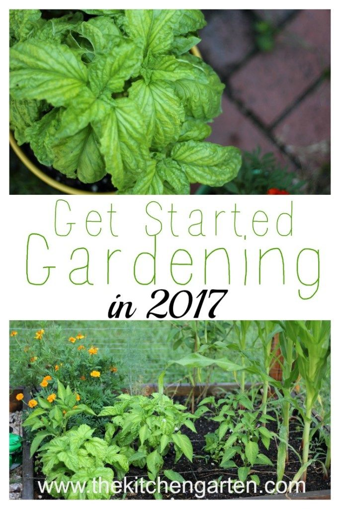 Why you should grow a garden in 2017! Fresh food, exercise, and money saved are all great reasons to start gardening this year!